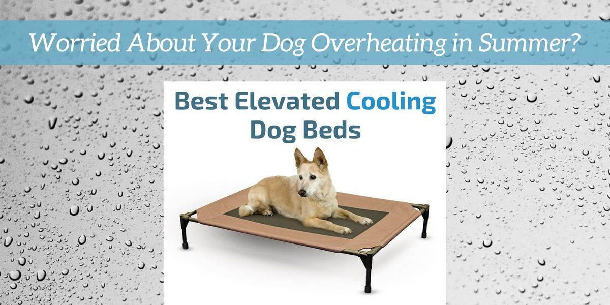 Best Elevated Cooling Dog Bed