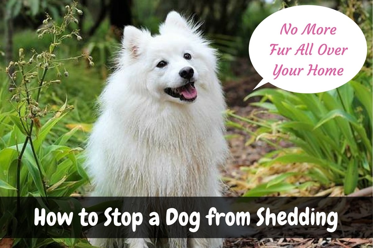 dog taming a to from stop how shedding for tricks prevent sheds fur the tips