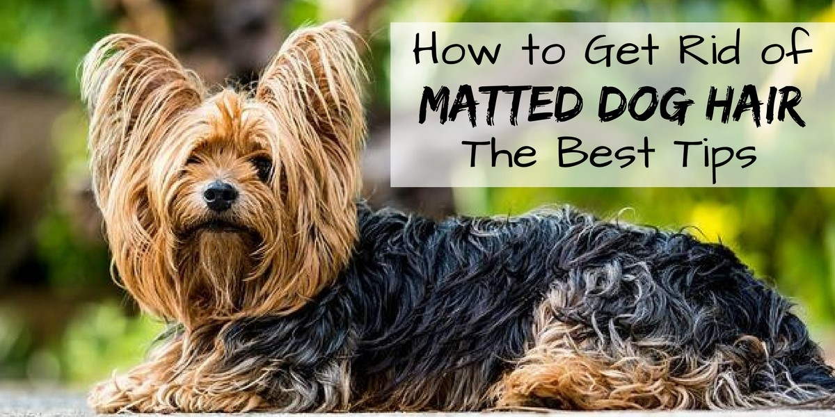 How To Get Rid Of Matted Dog Hair The Best Tips