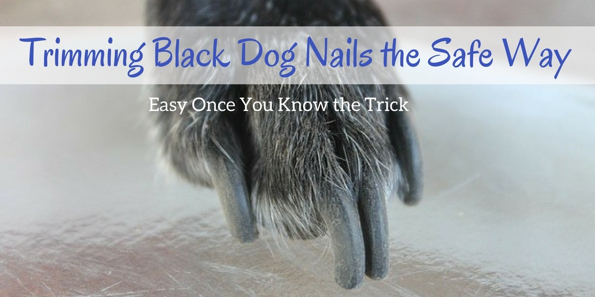 Trimming Black Dog Nails The Safe Way Easy Once You Know The Trick