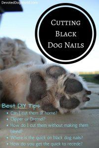 Trimming Black Dog Nails