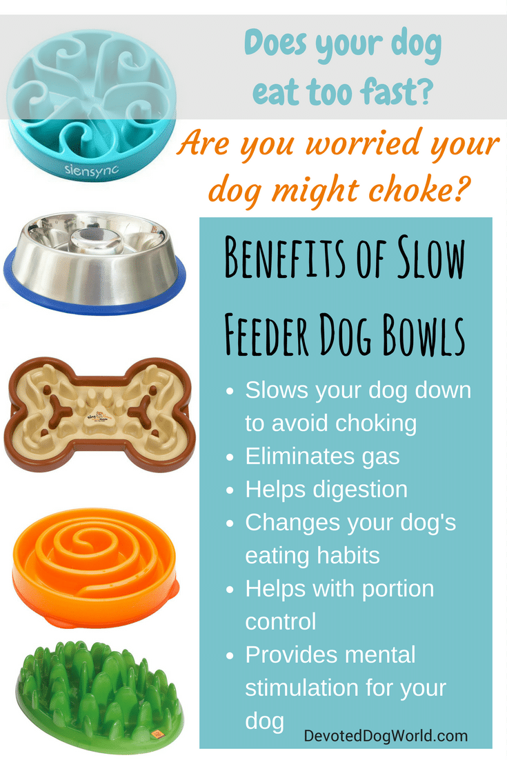 Best Slow Feeder Dog Bowl pin 1