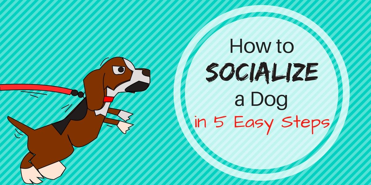 How to socialize a dog