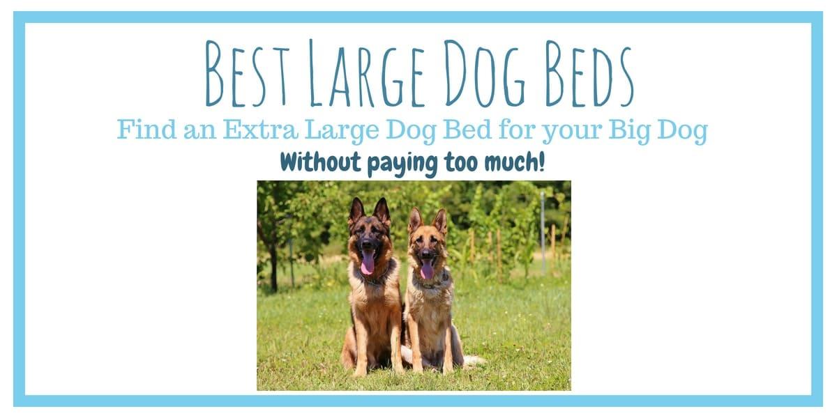 Best large dog beds header