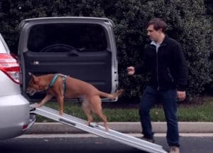 Best Dog Ramp for Car and Truck