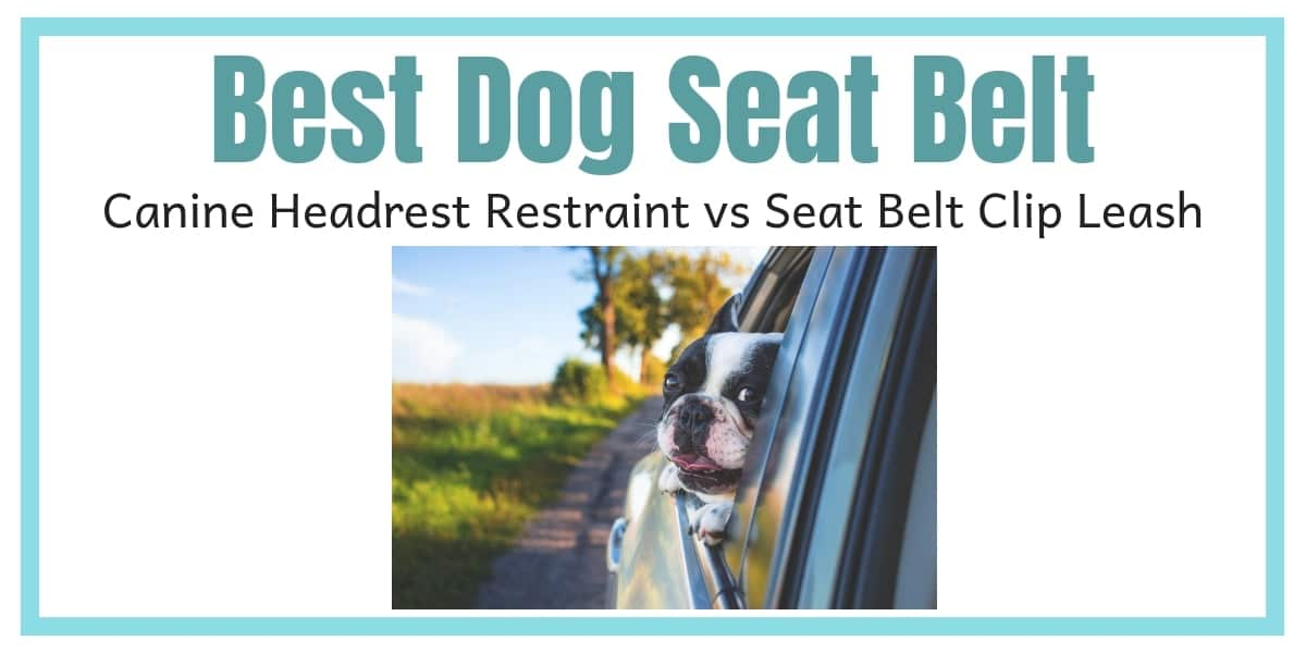 Best Dog Seat Belt