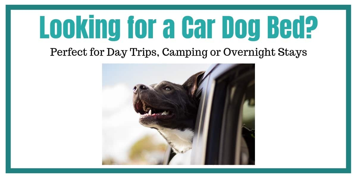 Car Dog Bed header