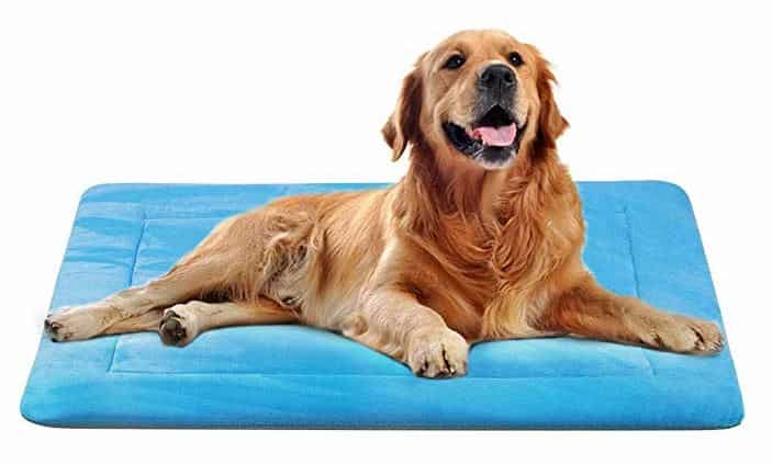 Machine Washable Dog Beds 4