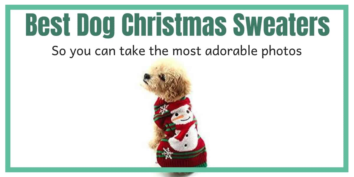 Best Dog Christmas Sweaters
