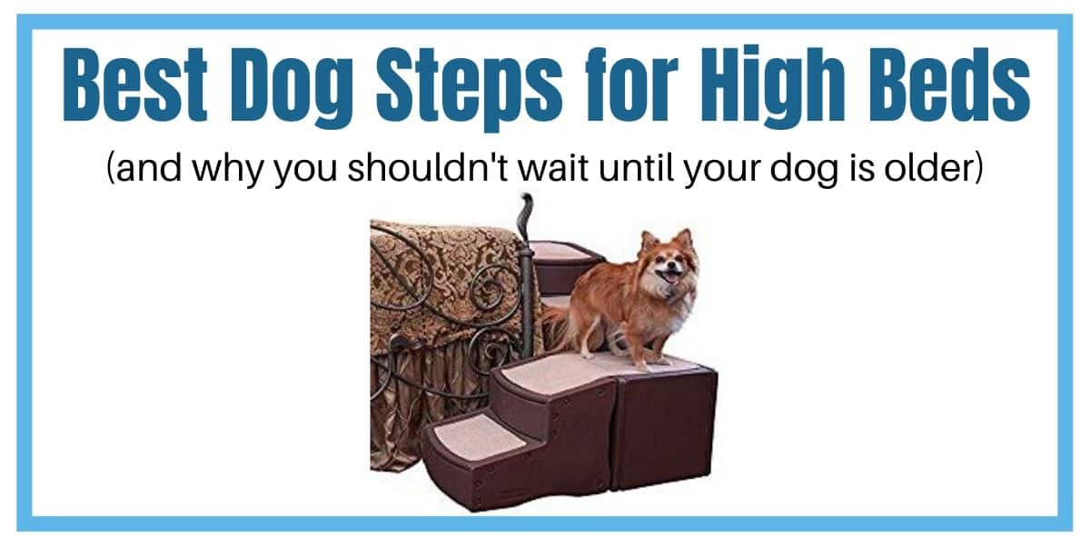 Best dog steps for high beds for small, medium or large dogs.